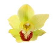 Orchidea isolata. Immagini Stock