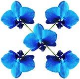 Orchidea isolata Immagini Stock Libere da Diritti