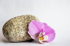 Orchidea kamień Obraz Stock