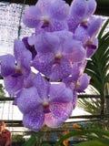 Orchidea kwiatów festiwal Zdjęcie Stock