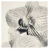Orchidea kwiat Zdjęcia Stock
