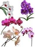 Orchidea kwiaty odizolowywający Fotografia Stock