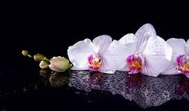 Orchidea kwiaty z wod kroplami i odbicie na czarnym backgr Fotografia Stock