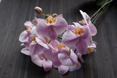 orchidea kwitnąca Obrazy Royalty Free