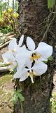 Orchidea kwitnie w wczesnym Kwietniu fotografia royalty free