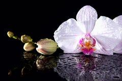 Orchidea kwitnie z odbiciem na czarnym tle Zdjęcie Stock