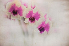 Orchidea na grunge starym papierze Fotografia Royalty Free