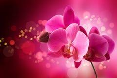 Orchidea na jaskrawym tle zdjęcia royalty free