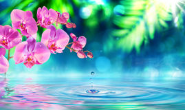 Orchidea nel giardino di zen con la gocciolina fotografia stock libera da diritti