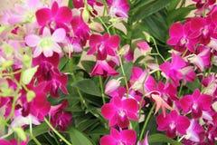 Orchidea nel rosso Fotografia Stock