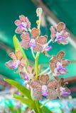 Orchidea nella serra fotografia stock