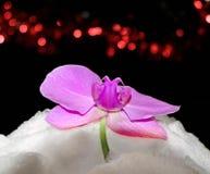 Orchidea in neve Fotografie Stock