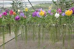 Orchidea ogród Fotografia Royalty Free