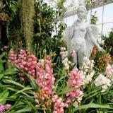 Orchidea ogród przy sztuka losem angeles ploen w Buriram Tajlandia Zdjęcie Royalty Free
