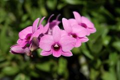 Orchidea, orchidee, fondo, rosa, bianco, fiore fotografie stock