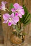 Orchidea porpora Fotografia Stock Libera da Diritti