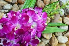 Orchidea porpora Fotografia Stock
