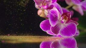 Orchidea porpora con gli zecchini dorati archivi video