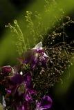 Orchidea porpora con il sole luminoso fotografia stock libera da diritti
