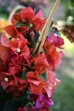Orchidea porpora, molto beautifoul Immagine Stock Libera da Diritti