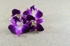 Orchidea porpora su fondo di legno Fotografie Stock