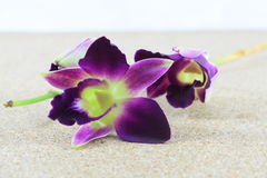 Orchidea porpora su fondo di legno Fotografia Stock Libera da Diritti