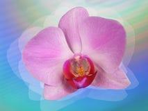 orchidea projektująca royalty ilustracja