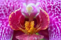 orchidea przy 2015 Storczykowymi przedstawieniami Fotografia Royalty Free