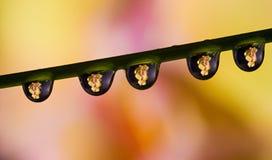 Orchidea rifranta nelle gocce di acqua fotografia stock libera da diritti