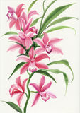 Orchidea rosa royalty illustrazione gratis