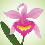 Orchidea rosa isolata nel fondo verde, illustrazione di vettore Fotografia Stock Libera da Diritti