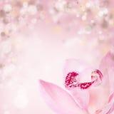 Orchidea rosa su fondo blured Fotografia Stock Libera da Diritti