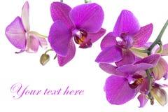 Orchidea scura di rumore metallico Immagini Stock