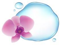 Orchidea sopra acqua. Vettore Fotografie Stock