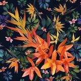 Orchidea, Strylitzia wzór Tropikalny kwiat, okwitnięcia grona bezszwowy wzór Piękny tło z tropikalnymi kwiatami, roślina ilustracji