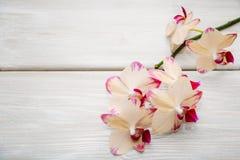 Orchidea su fondo di legno Immagini Stock Libere da Diritti