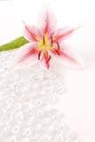 Orchidea su ghiaccio Fotografia Stock