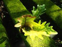 Orchidea su muschio Fotografia Stock Libera da Diritti