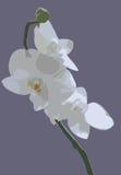 Orchidea su un background1 a strisce. Illustrazione di Stock