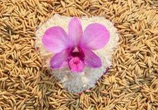 Orchidea sul riso del cuore Fotografia Stock Libera da Diritti