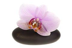 Orchidea sulla pietra di zen Immagine Stock