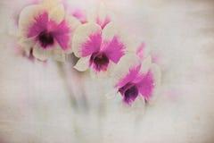 Orchidea sulla vecchia carta di lerciume Fotografia Stock Libera da Diritti
