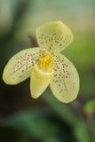 Orchidea a terra tropicale Fotografie Stock
