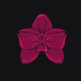 Orchidea tropicale Fotografia Stock Libera da Diritti