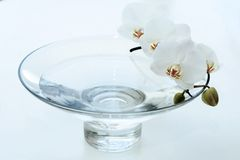 Orchidea in vaso blu Fotografia Stock