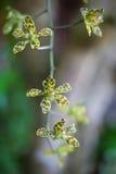 Orchidea verde di Tropycal della foto sui precedenti vaghi Flores selvaggio della natura Maschera verticale immagine stock libera da diritti