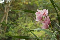 Orchidea w parku Zdjęcie Stock