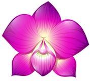 Orchidea w purpura kolorze ilustracji