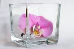 Orchidea w szkle Zdjęcie Royalty Free