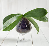 Orchidea w wazie na białym tle Fotografia Royalty Free